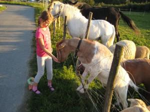 ueber Leckerlies freuen sich die Tiere